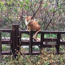 Q. 가뭄에 콩 나듯 있는, 애교 많은 한국 길고양이 심리 4