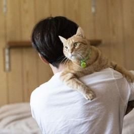 Q. 고양이가 안기기 싫어하는 이유 네 가지는?