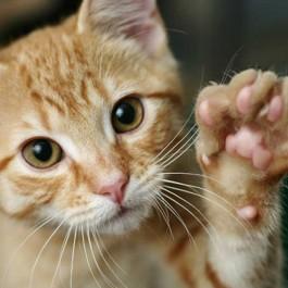 고양이가 앞발로 가볍게 집사를 톡톡 칠 때 마음 3