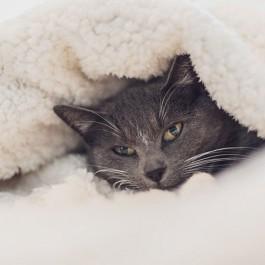 Q. 고양이가 추위를 느낄 때 하는 다섯 가지 행동은?