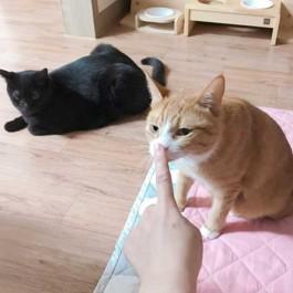 Q. 킁킁~, 고양이가 집사 냄새를 맡을 때 심리