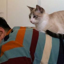 Q. 고양이가 집사를 기억하는 방법 4