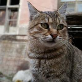 Q. 고양이가 인간을 믿지 못하게 되는 상황 4