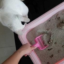 Q. 화장실 청소할 때 고양이가 곁에서 보고 있는 이유 4