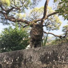 Q. 고양이 사회에서 대장고양이는 어떤 존재일까