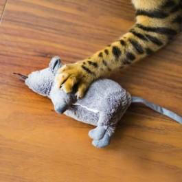 Q. 고양이가 사냥감을 집사에게 물어다 주는 진짜 이유