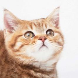 """고양이가 인간처럼 짧게 """"응""""하고 울 때 마음"""