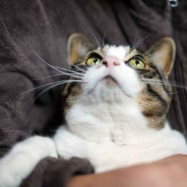 Q. 고양이에게 집사는 어떤 존재일까