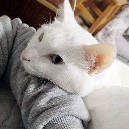 Q. 고양이가 집사 몸에 턱을 올리고 있을 때 마음 4