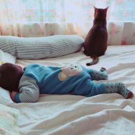 Q. 왜 고양이의 시간은 인간보다 4배 빠를까