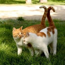 고양이가 친하게 지내고 싶은 고양이한테 하는 행동 5