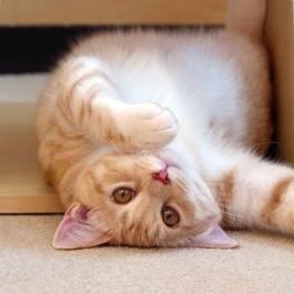 고양이가 바닥에서 뒹굴뒹굴하고 싶어 지는 상황 5