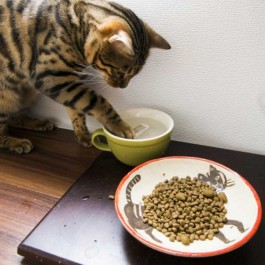 Q. 일명 '찍먹냥', 고양이가 밥과 물을 앞발로 찍어 먹는 이유