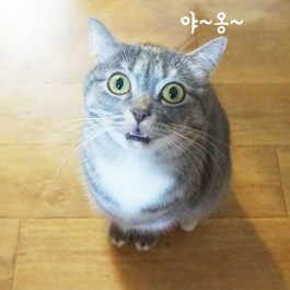 Q. 부르면 대답해주는 고양이 심리 5