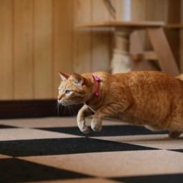 하루 5분, 고양이가 갑자기 우다다가 하고 싶을 때 마음 4