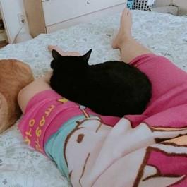 Q. 고양이가 집사 다리 사이에서 자는 이유 3