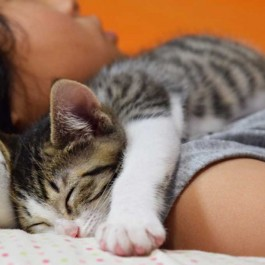 Q. 고양이가 함께 잘 집사를 고르는 기준  네 가지는?