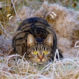 Q. 왜 고양이는 사냥감을 노릴 때 엉덩이를 실룩거릴까?