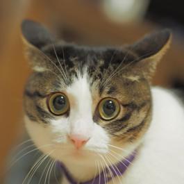 Q. 고양이가 불안할 때 보이는 모습 4