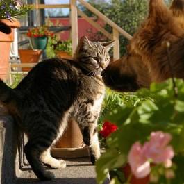 Q. 개와 고양이, 가장 큰 6가지 차이점