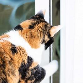 Q. 고양이가 문을 직접 여는 이유 4