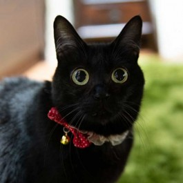 Q. 고양이 눈이 평소보다 반짝반짝 빛날 때 기분