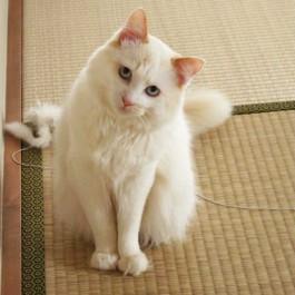 Q. 고양이가 고개를 갸웃뚱하는 이유 4