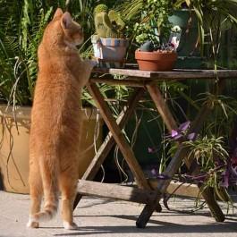 Q. 고양이가 뒷다리로만 서 있는 이유