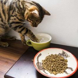 Q. 왜 고양이는 물을 잘 마시지 않을까