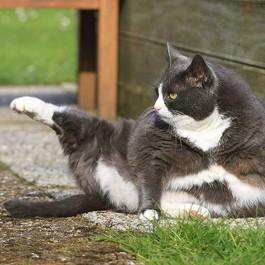 Q. 고양이 엉덩이가 더러운 이유와 닦아주는 법