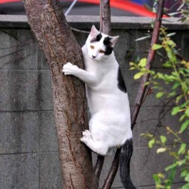 Q. 왜 고양이는 나무를 잘 타는가