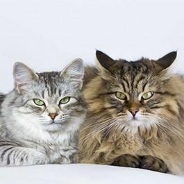 Q. 남과 여, 고양이도 성별에 따른 성격 차가 있을까