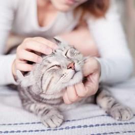 """고양이가 """"만져도 돼""""라고 생각하고 있을 때 보내는 신호 7"""