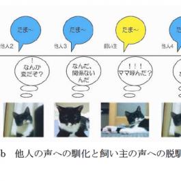Q. 고양이는 반려인의 목소리를 기억할까?