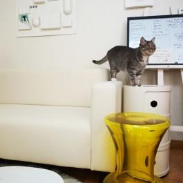 고양이와 함께 산다면 격하게 공감 하는 8 가지