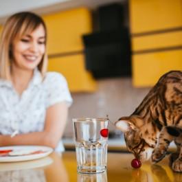 고양이도 물 안 마시면 변비 걸림, 수분 부족으로 나타날 수 있는 질환 2