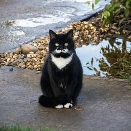 고양이가 이집트 자세로 앉아 있을 때 기분 딱 둘