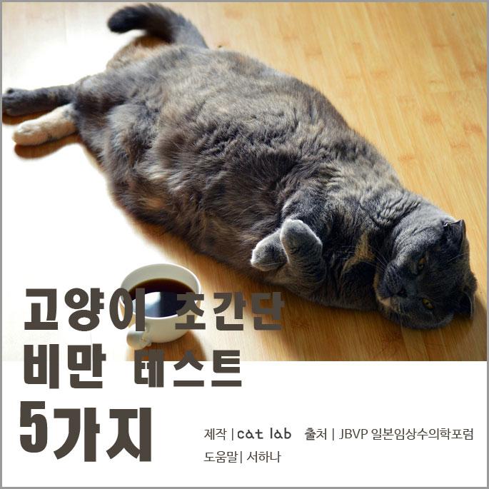 고양이 초간만 비만 테스트 5가지