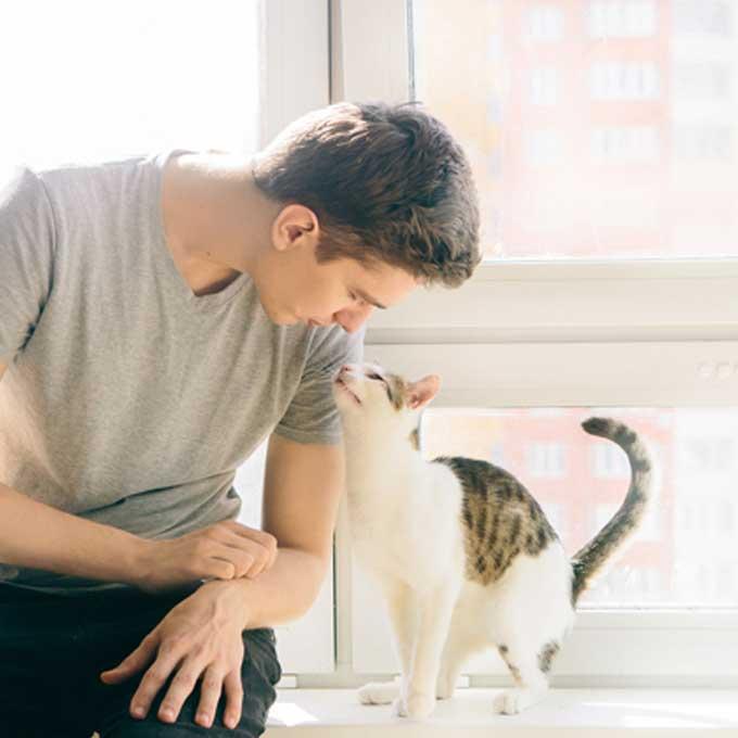 12가지 이 행동을 고양이가 모두 하면, 마음을 연 것
