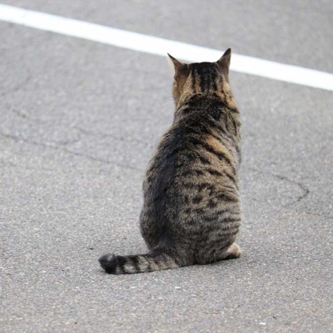 짐작하고 있었지만... 길고양이 삶, 이렇게 고달프다