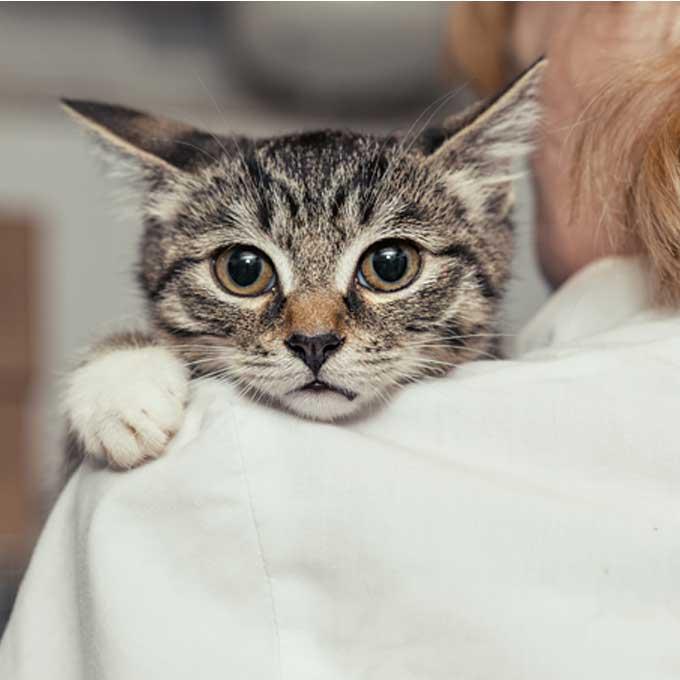 고양이를 암 걸리게 하는 주요 원인 4