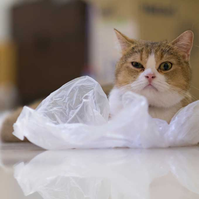 """""""이런 소리 좋아"""", 고양이를 힐링케 하는 소리 4"""