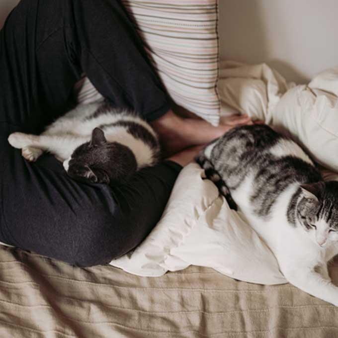 """""""움직일 수 없긔"""", 고양이가 집사를 꼼짝 못 하게 하는 행동 5"""