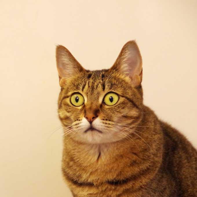자기 주장이 강한 고양이가 많이 하는 행동 7