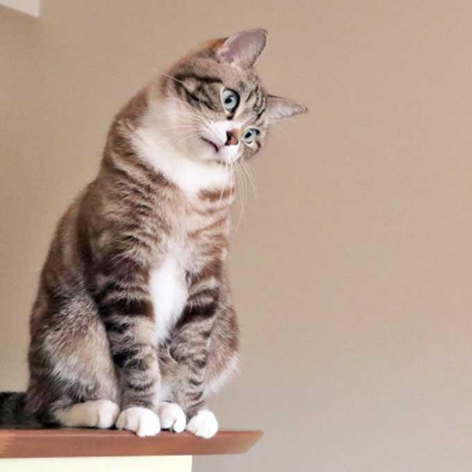 고양이를 정서불안으로 만드는 집사 행동 4