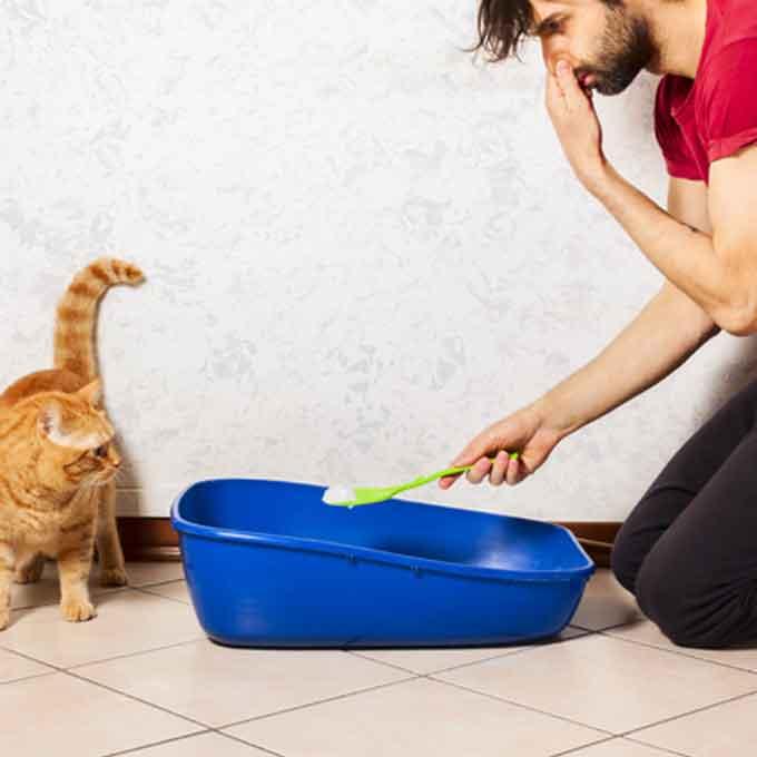 고양이 화장실 청소할 때 집사들이 자주 놓치는 NG 행동 3
