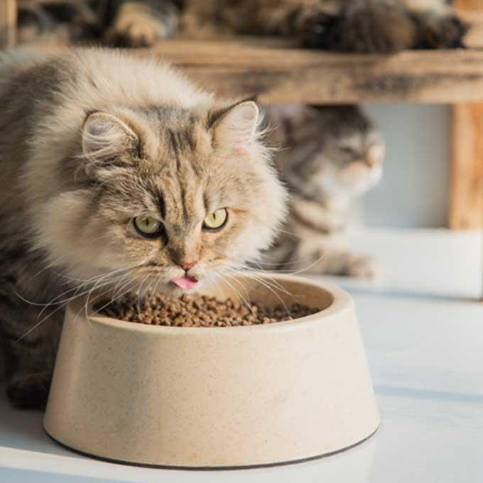 이거시 양보문화, 언니 오빠 고양이가 동생 고양이 챙기는 상황 4