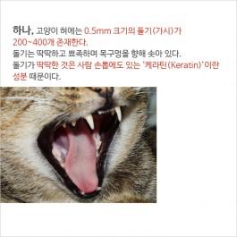 당신이 몰랐던 고양이 혀에 대한 비밀 5가지
