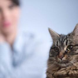 고양이를 키울 때 반드시 필요한 6 가지 각오