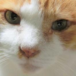 """""""난…ㄱㅏ끔…눈물을 흘린ㄷㅏ…"""" 고양이는, 이럴 때 눈물 흘린다"""